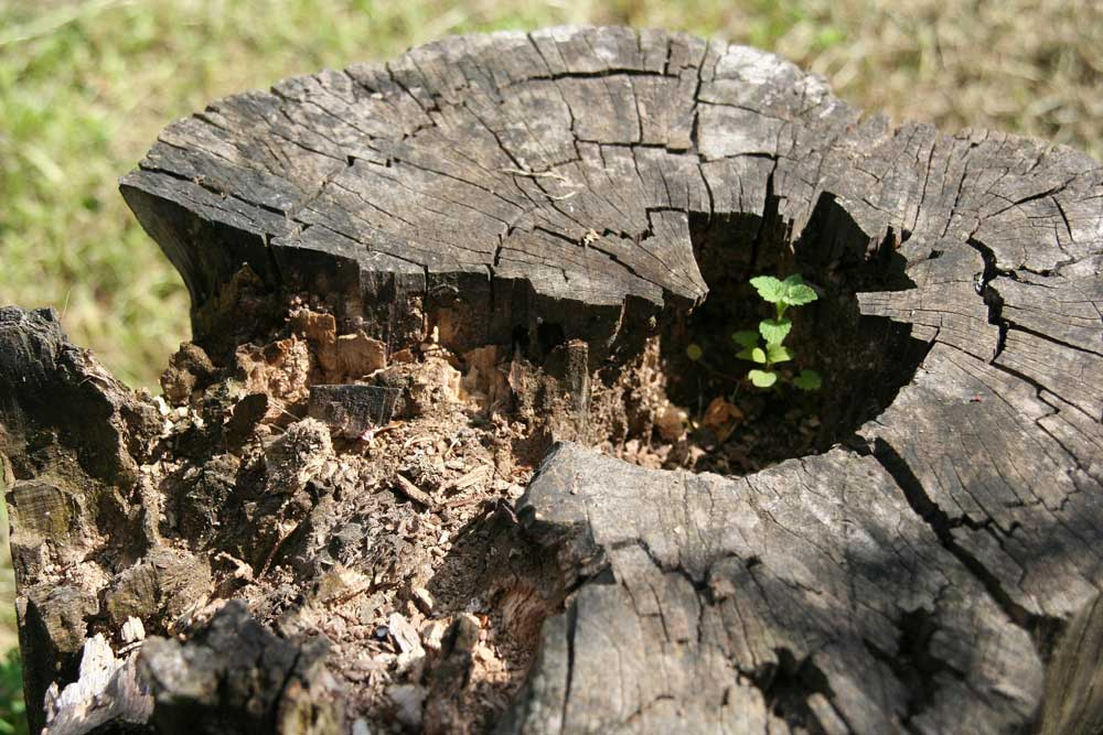 Children's Tree Campaign - Open Letter