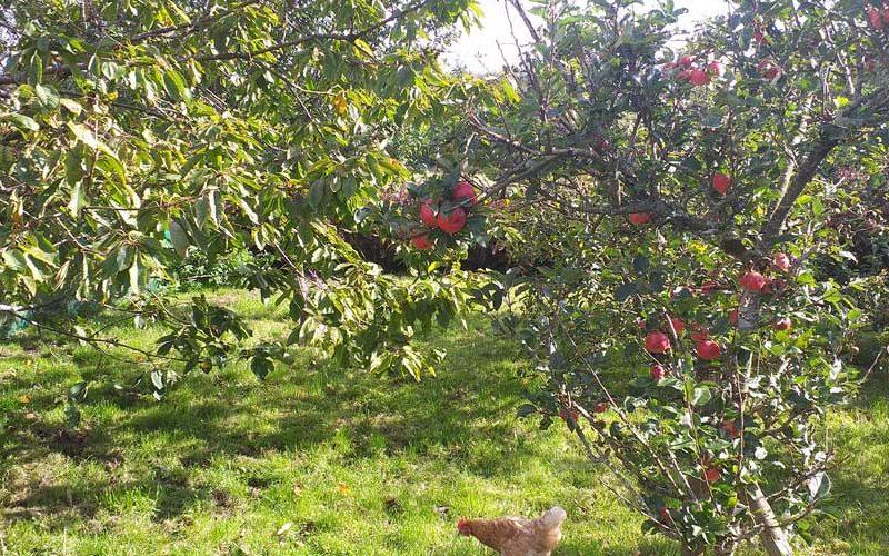 Children's Tree Campaign - Orchard